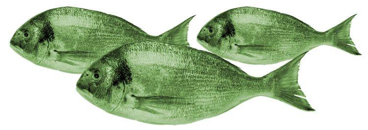 FISH Modell