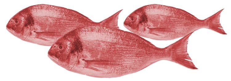 FISH Content